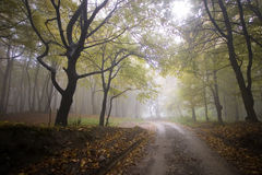 Camino a través de un bosque colorido en otoño fotos de archivo