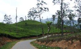 Camino a través de una plantación de té Imágenes de archivo libres de regalías