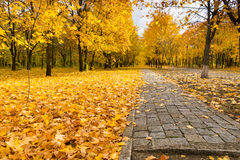 Camino a través del arbolado colorido del otoño Imagenes de archivo