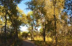 Camino a través del borde del bosque fotografía de archivo libre de regalías