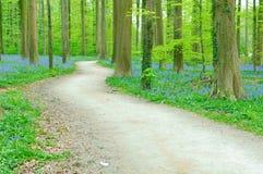 Camino a través del bosque Fotos de archivo libres de regalías