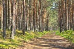 Camino a través del bosque. Imagen de archivo libre de regalías