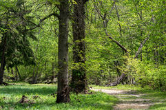 Camino a través del bosque Imagen de archivo libre de regalías