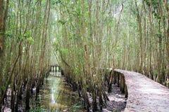Camino a través del bosque Fotos de archivo