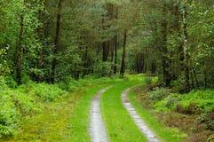 Camino a través del bosque fotografía de archivo