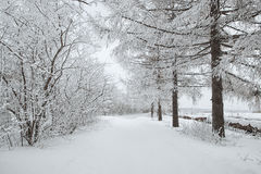 Camino a través del bosque congelado con nieve Foto de archivo