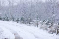 Camino a través del bosque del invierno Fotos de archivo