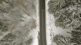 Camino a través del bosque del invierno almacen de metraje de vídeo
