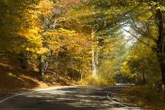 Camino a través del bosque del otoño Fotos de archivo libres de regalías