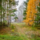 Camino a través del bosque en la caída imagen de archivo