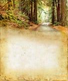 Camino a través del bosque en un fondo del grunge Imágenes de archivo libres de regalías