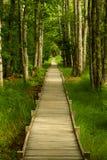 Camino a través del bosque, Maine foto de archivo libre de regalías