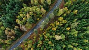 Camino a través del bosque otoñal - visión aérea almacen de metraje de vídeo