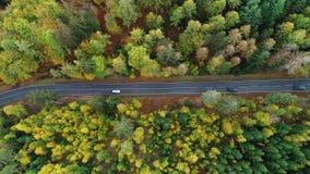 Camino a través del bosque otoñal - visión aérea metrajes
