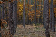 Camino a través del bosque del otoño Fotos de archivo