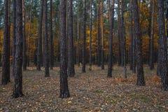Camino a través del bosque del otoño Imágenes de archivo libres de regalías