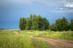 Camino a través del campo verde con los árboles de abedul después de una tormenta Imagen de archivo
