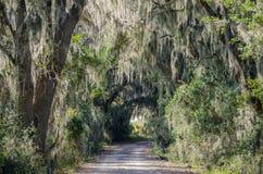 Camino a través del musgo español, Savannah National Wildlife Refuge Imágenes de archivo libres de regalías