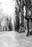 Camino a través del parque Fotografía de archivo