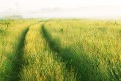 Camino a través del prado Fotografía de archivo