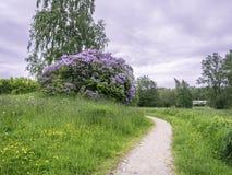 Camino a través del prado foto de archivo