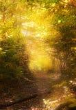 Camino a través del bosque mágico Fotos de archivo libres de regalías