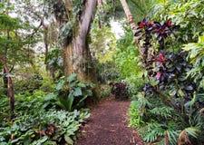Camino tropical de la selva foto de archivo