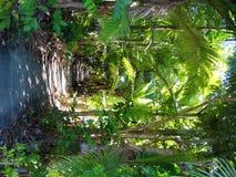 Camino tropical del jardín Fotografía de archivo libre de regalías