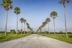 Camino tropical escénico Foto de archivo