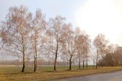 Camino vacío del campo hermoso, bosque del árbol de abedul, paisaje nublado del tiempo imagen de archivo