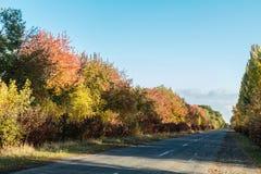 Camino vacío del otoño a lo largo de campos de trigo de oro de invierno Imagen de archivo