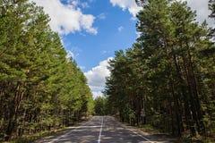 Camino vacío del verano que pasa a través de la plantación de piñas en el parque nacional de la naturaleza de Burabai, Kazajistán Fotografía de archivo libre de regalías