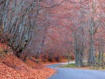 Camino vacío en el bosque Fotografía de archivo libre de regalías