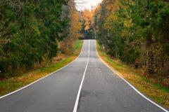 Camino vacío en el bosque del otoño Imagen de archivo libre de regalías