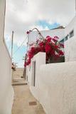 Camino vacío en Grecia con las flores de la buganvilla Fotos de archivo