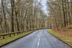 Camino vacío en un bosque imagen de archivo libre de regalías
