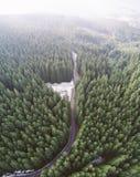 Camino vacío en un bosque de un abejón fotografía de archivo libre de regalías