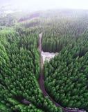 Camino vacío en un bosque de un abejón foto de archivo