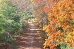 Camino vacío en un día claro del otoño fotos de archivo libres de regalías