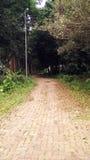 Camino vacío a la selva imágenes de archivo libres de regalías
