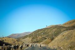 Camino vacío que lleva a través del campo escénico, Nueva Zelanda Fotos de archivo libres de regalías