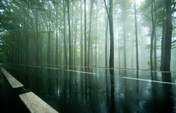 Camino vacío a través del bosque oscuro brumoso de la haya Fotografía de archivo libre de regalías