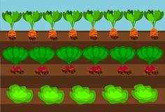 Camino vegetal