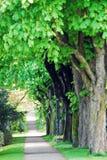 Camino verde Imagen de archivo libre de regalías