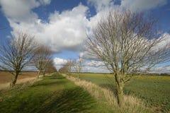 Camino verde fotos de archivo libres de regalías