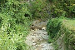 Camino verde Fotos de archivo