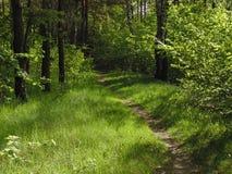 Camino verde Foto de archivo