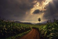 Camino verde, aire fresco y fango Fotografía de archivo libre de regalías
