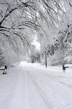 Camino y árboles blancos en la estación del invierno fotografía de archivo libre de regalías