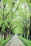 Camino y árboles después de la lluvia Fotos de archivo libres de regalías